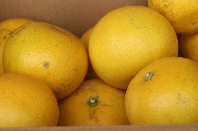 grapefruits2