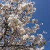 満月キャンペーン開催!&臨時休業のお知らせ